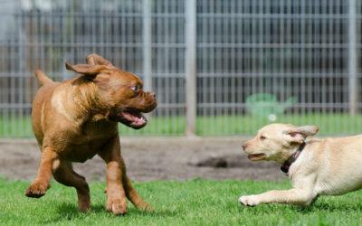 Comment choisir une bonne pension pour faire garder votre chien ?